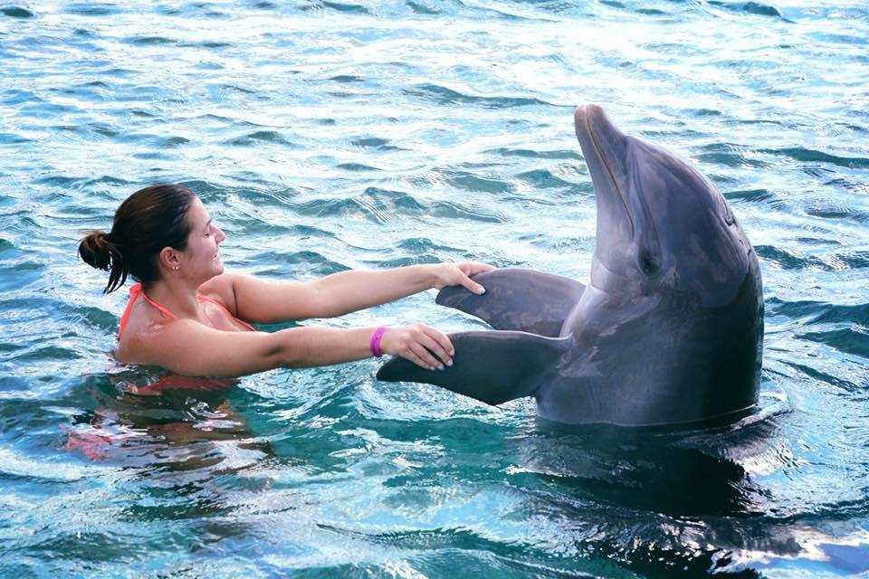 Dolphin Academy van Seaquarium