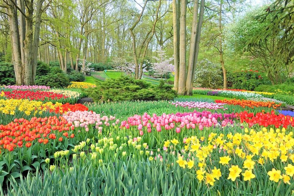 garden-3348404_960_720