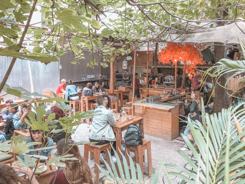 Six d.o.g.s Athens Casa Borita